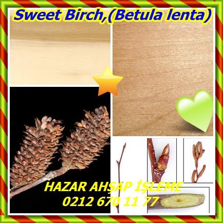 catsSweet Birch,(Betula lenta)434