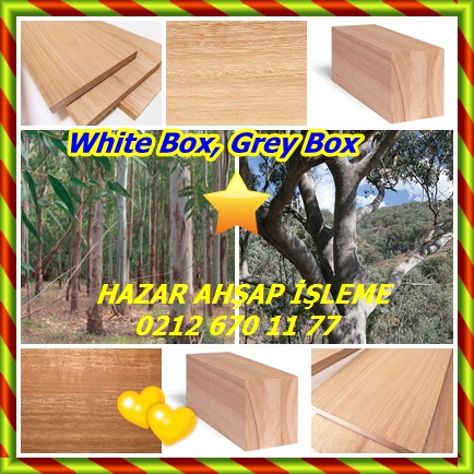 catsWhite Box, Grey Box34
