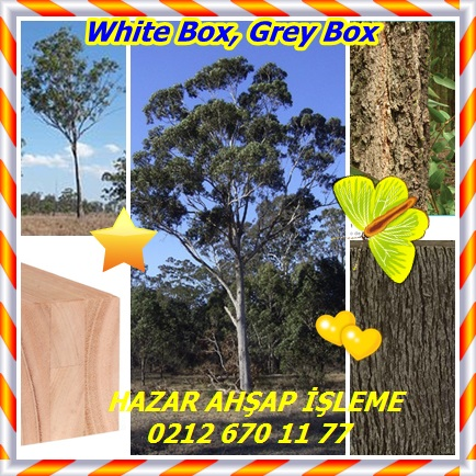catsWhite Box, Grey Box77