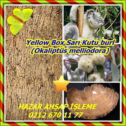 catsYellow Box,Sarı Kutu burl (Okaliptüs melliodora)232