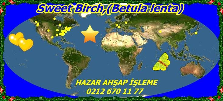map_of_Betula_lenta