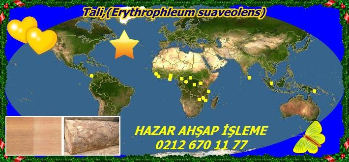 20mTali,(Erythrophleum suaveolens)33