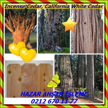 catsIncense Cedar, California White Cedar88
