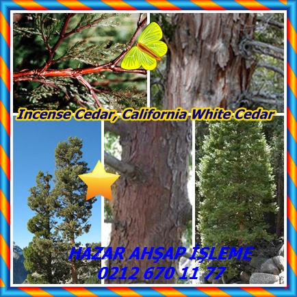catsIncense Cedar, California White Cedar98