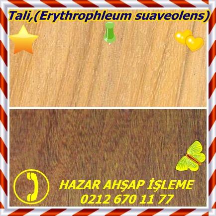 catsTali,(Erythrophleum suaveolens)
