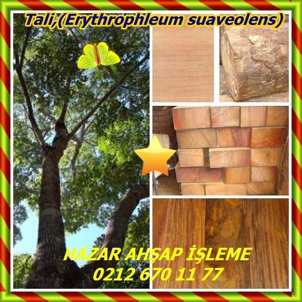 catsTali,(Erythrophleum suaveolens)555
