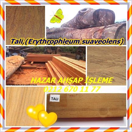 catsTali,(Erythrophleum suaveolens)77