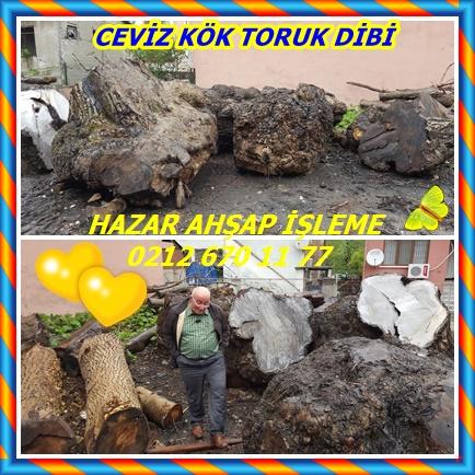CEVİZKÖK2